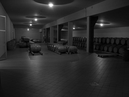Barrel Cellar of Le Macchiole